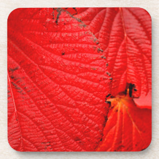 Red leaves drink coasters