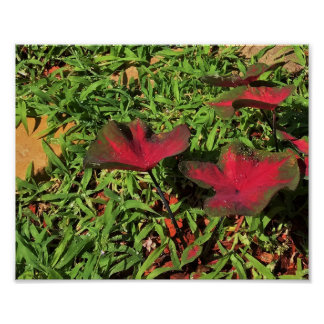Red Leaves with Water Droplets Poster