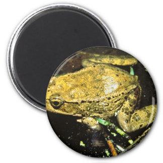 Red legged frog fridge magnets