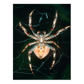 Red-Legged Orb-Web Spider Postcard