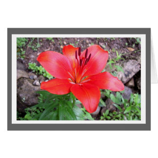 Red Lilie 3 Greeting Card
