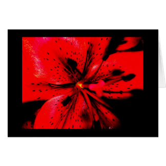 Red Lilly Card
