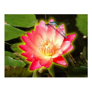 Red Lily and Dragonfly Postcard