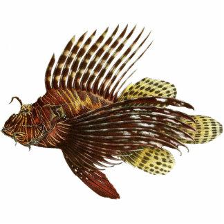 Red Lionfish Vintage Print Standing Photo Sculpture