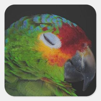 Red Lored Amazon Winking Bird Sticker