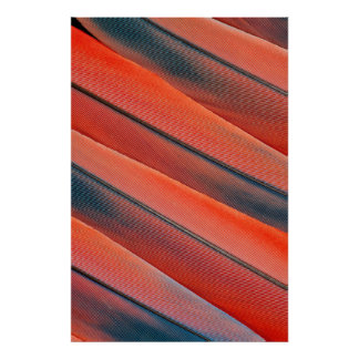 Red Macaw Feather Abstract Poster