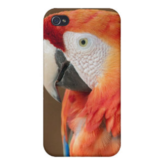 Red Macaw iPhone 4/4S Cases