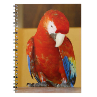 Red Macaw Notebook
