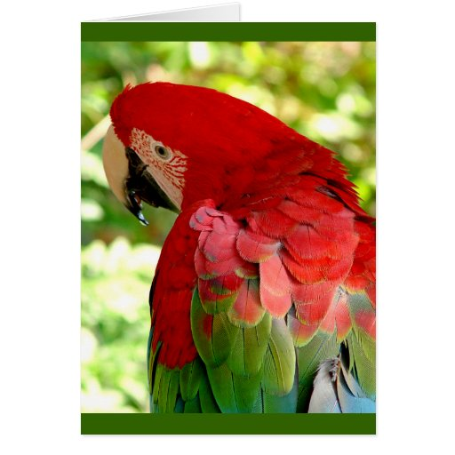 Red Macaw Parrot Greeting Card