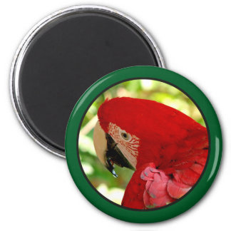 Red Macaw Parrot Magnet