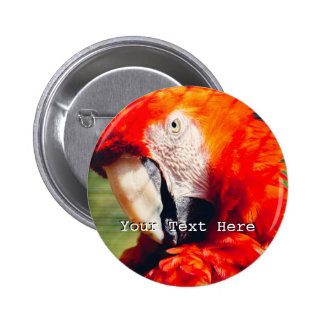 Red Macaw Parrot Portrait, Exotic Bird Pins