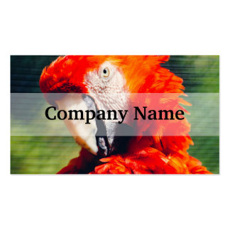 Red Macaw Parrot Portrait, Exotic Bird Business Card Template