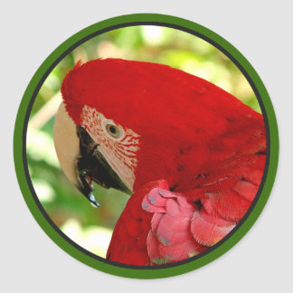 Red Macaw Parrot Sticker