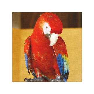 Red Macaw Tropical Parrot in Mexico Canvas Print