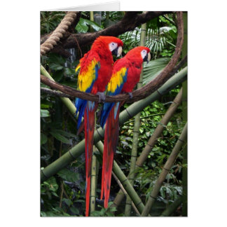 red macaws greeting cards