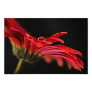 Red Macro Gerbera Flower Photo Print