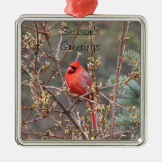 Red Male Cardinal Season's Greetings Ornament Ornament