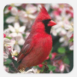 Red Male Cardinal Square Sticker
