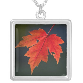 Red Maple Acer rubrum) red leaf in autumn, Square Pendant Necklace