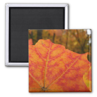Red Maple Leaf Abstract Autumn Nature Photography Square Magnet