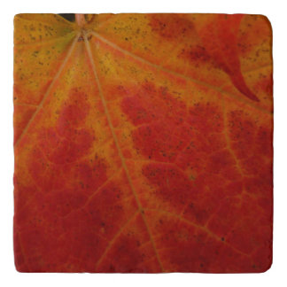 Red Maple Leaf Abstract Autumn Nature Photography Trivet