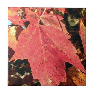 RED MAPLE LEAF IN AUTUMN SMALL SQUARE TILE