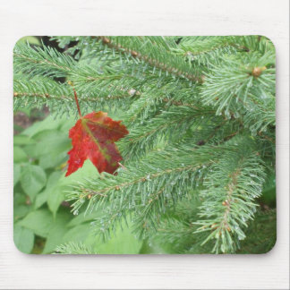Red Maple Leaf on Pine Branch Mouse Pad