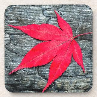 Red maple leave on black burnt wood coasters
