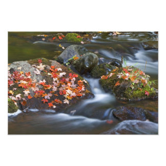 Red maple leaves carpet the rocks in the photo art