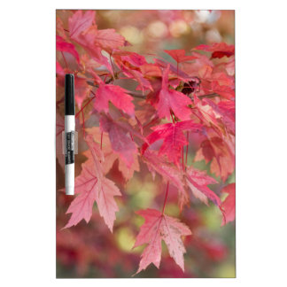 Red Maple Leaves Dry Erase Board