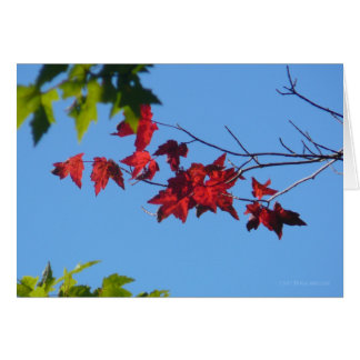 Red Maple Leaves Greeting Card