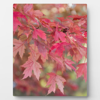 Red Maple Leaves Plaque