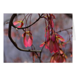 Red Maple Seeds Note Card