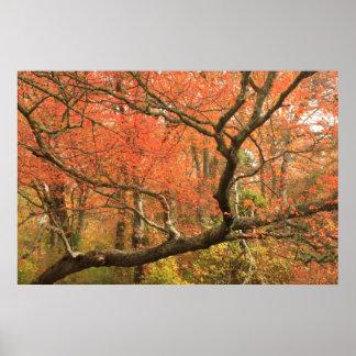 Red Maple Swamp Cape Cod National Seashore 2 Print