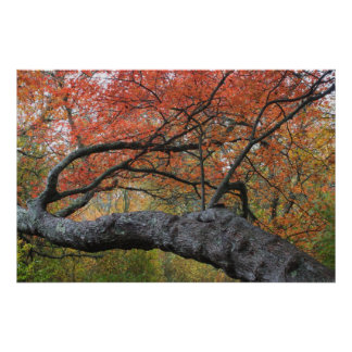 Red Maple Swamp Cape Cod National Seashore Posters