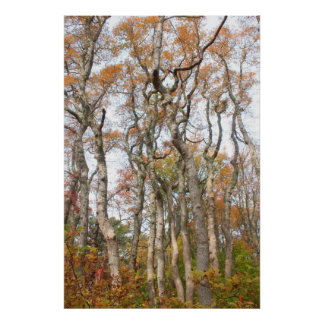Red Maple Swamp Grove Cape Cod National Seashore Poster