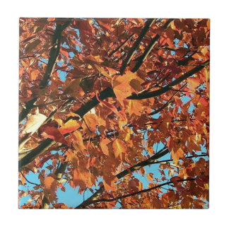 RED MAPLE TREE IN AUTUMN FALL SMALL SQUARE TILE