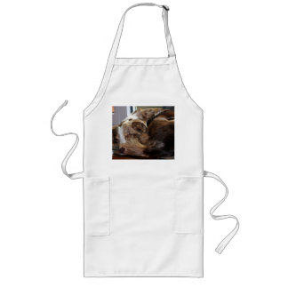 red merle mini aussie sleeping 2 long apron