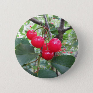 Red Montmorency cherries on tree in cherry orchard 6 Cm Round Badge