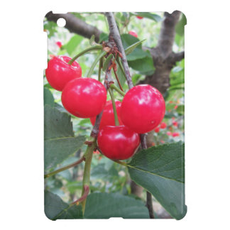 Red Montmorency cherries on tree in cherry orchard iPad Mini Cases