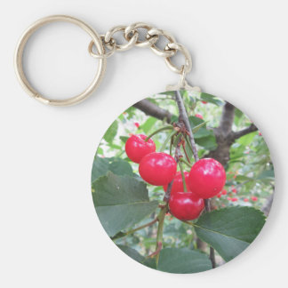 Red Montmorency cherries on tree in cherry orchard Key Ring