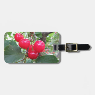 Red Montmorency cherries on tree in cherry orchard Luggage Tag