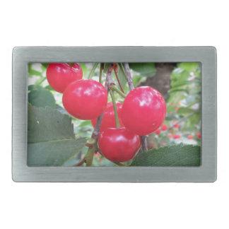Red Montmorency cherries on tree in cherry orchard Rectangular Belt Buckles