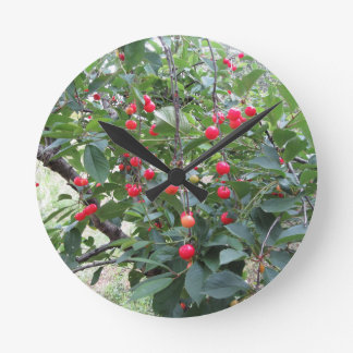 Red Montmorency cherries on tree in cherry orchard Round Clock