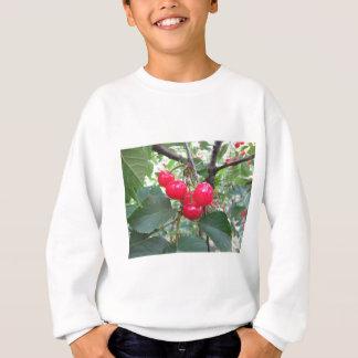 Red Montmorency cherries on tree in cherry orchard Sweatshirt