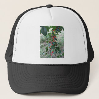 Red Montmorency cherries on tree in cherry orchard Trucker Hat