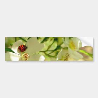 Red N Black Ladybug on a white blackberry flower Bumper Sticker