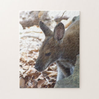 Red-necked Wallaby Puzzle