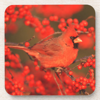 Red Northern Cardinal Male, IL Drink Coaster