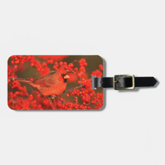 Red Northern Cardinal Male, IL Luggage Tag